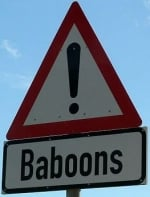 baboons-warning-sign-africa