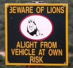 beware-of-lions-sign-africa