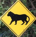 jaguar-crossing-sign-guatemala