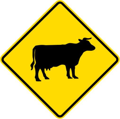 beware of cows on the road