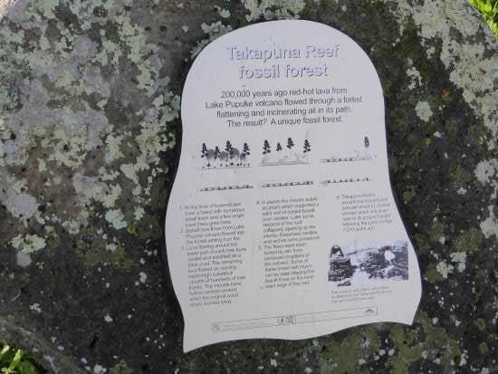Historic marker Takapuna reef
