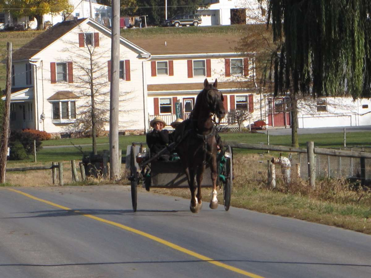 Horse and buggy riding on a road with a yellow centre line