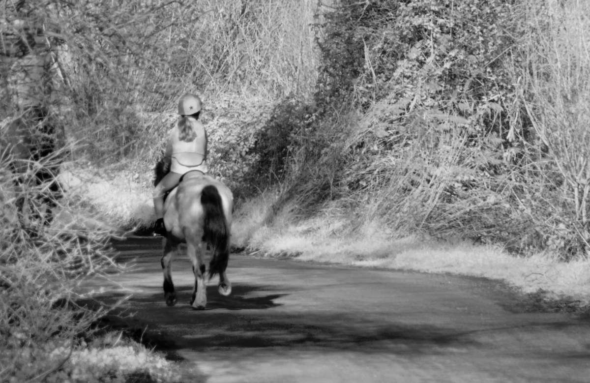 horse and rider on a left hand bend in a narrow lane